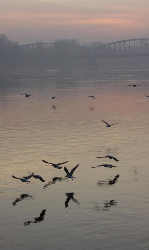#ZachódSlońca #ptaki #wisła