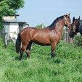#agroturystyka #Arkadia #Boy #konie #Ratafia #ślązaki #Relaks #RewiaIII #stadnina #WielkaLipa