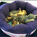 Aniołeczki... ciekawe jak długo ;) #Wiewiórki