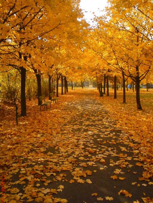 #jesień #liście #park #drzewa #JesienneKolory