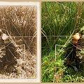 stare foto...a gdyby tak na grzyby popatrzeć okiem artysty? #collage #grzyby #jesień #inaczej #StaraFotografia #NaPieńku