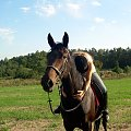 Leśna + Owacja = szajba :)) grunt to zaufanie... #Owacja #koń #klacz #leśna