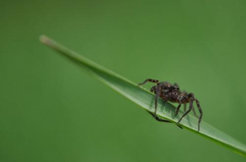 #frankfurt #makro #odra #Pajak #pająk #przyroda #spinne #wiosna