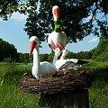 gniazdo bocianie #gniazdo #bocian #zaba