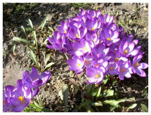 Wiosna nadeszła.......... #wiosna