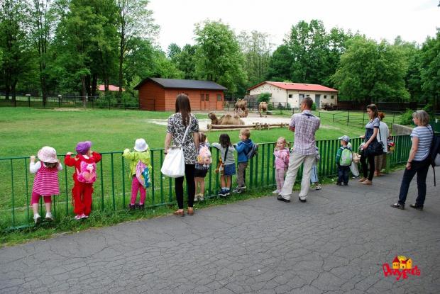 Nie zapomnimy tego #Częstochowa #dziecko #przedszkole #PrzedszkoleCzęstochowa #PrzedszkolePRZYGODA #ZOO #Chorzów