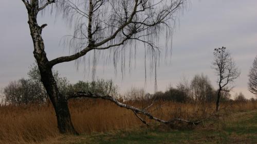 #dmuchawce #natura #przyroda #słóńce #stokrotka