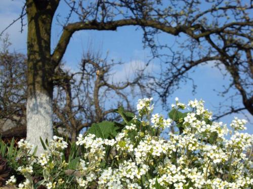 wiosennie...... #wiosna #kwiaty #niebo #natura